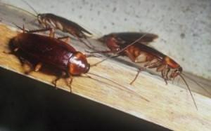 Απολυμάνσεις - κατσαρίδες