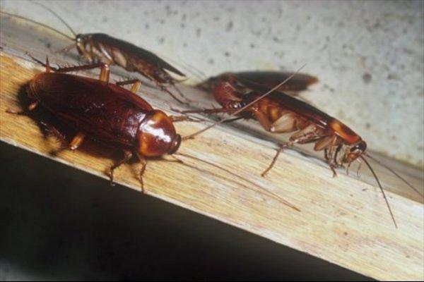 Πως να απαλλαγείτε μια για πάντα από τις κατσαρίδες