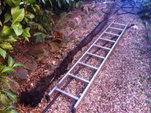Μεγάλη ρίζα, δίπλα σε μια σκάλα που έβγαλε η Αποφράξεις Βουλιαγμένης στην Βουλιαγμένη